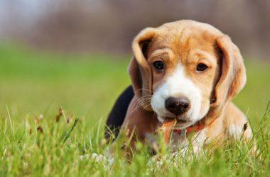 Benefits of RSPCA Pet Insurance