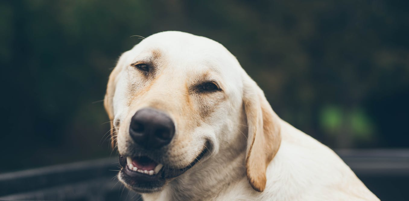 Dog Health Insurance - The Wise Investment in Your Budget Planning
