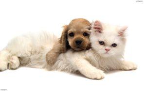 Health Insurance For Pet Rabbits