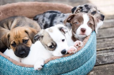 How Do You Choose Which Pet Insurance is Best?
