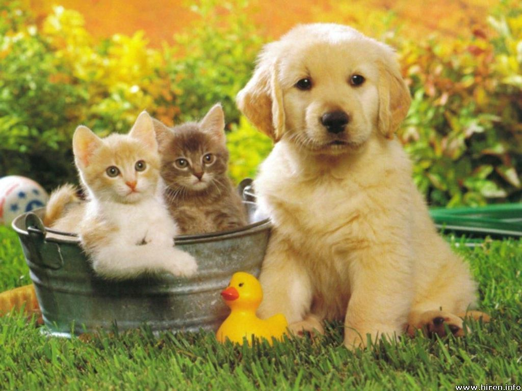 Tips About ASDA Pet Insurance