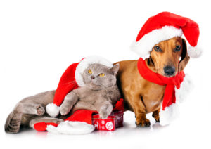 VIP Pet Insurance Can Certainly Help Protect Your Pet's Well-Being